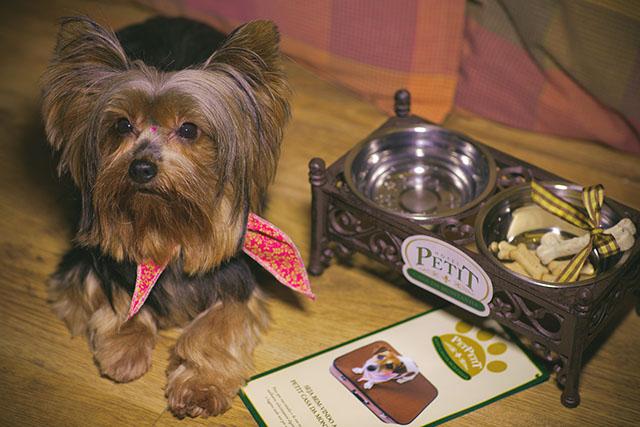 Exigentes, Pets ganham tratamento VIP em hotéis