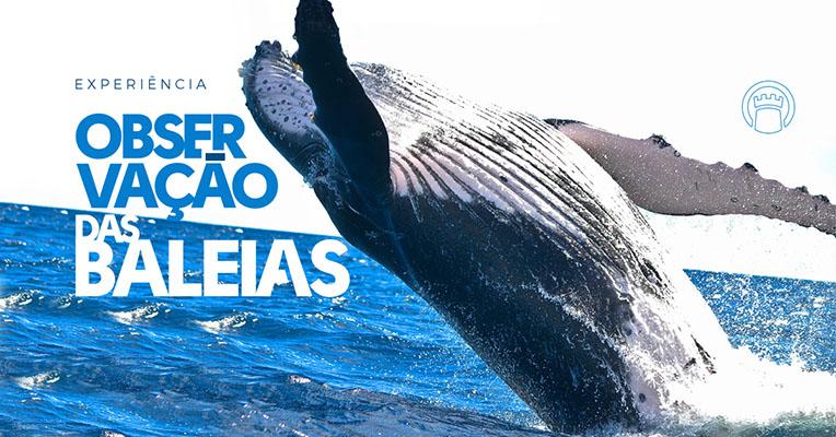 Hóspedes do La Torre (BA) poderão observar as Baleias Jubartes