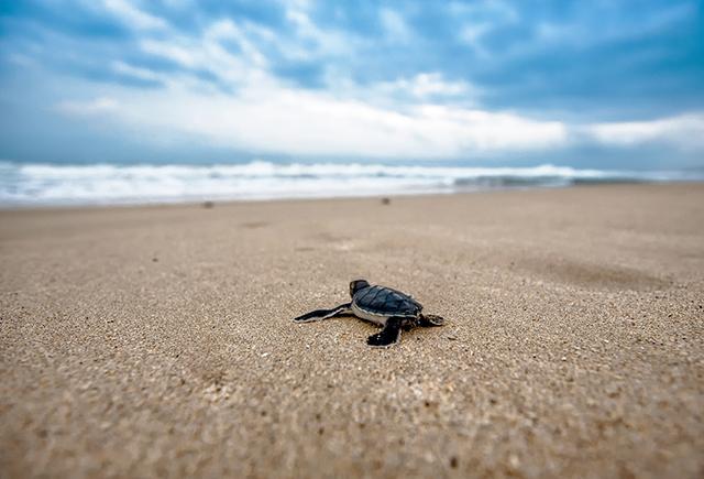 Beach Park e Pordunas promovem treinamento sobre soltura de tartarugas