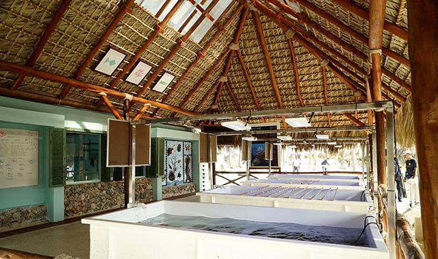 Iberostar Hotels & Resorts inaugura laboratório de corais no Caribe