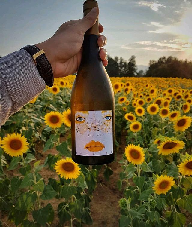 MMV Importadora lança vinho orgânico com personalidade marcante no Brasil