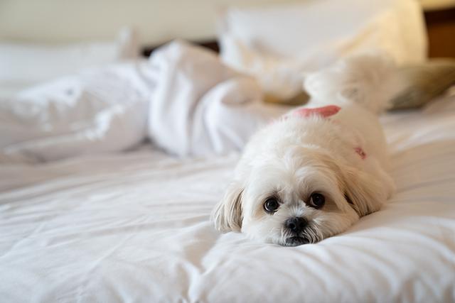 Maksoud Plaza (SP) adota política Dog Friendly