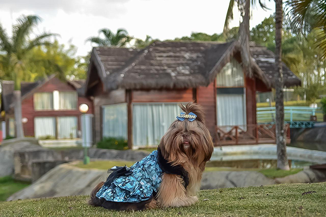 Mavsa Resort abre experiência dog friendly