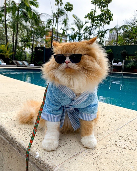 Tivoli Mofarrej SP adota política pet-friendly