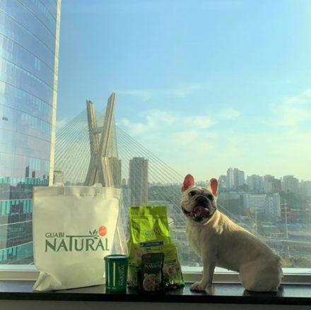 Hilton São Paulo Morumbi e Guabi Natural fazem ações para cães