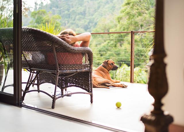 """""""Pet friendly"""" é tendência e hotéis se adaptam para receber animais"""