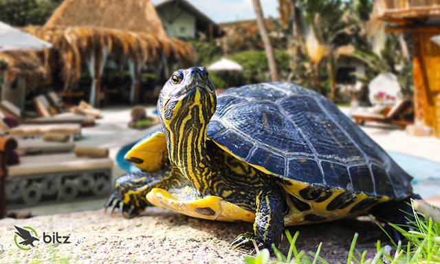 Bitz Softwares encontra as tartarugas da hotelaria