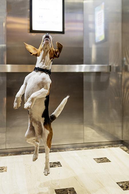 Wojo, coworking da Accor, adota política pet-friendly